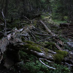 Romania - Experience Wilderness Eastern Carpathians