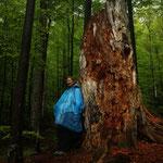 Slowakia - Naturtour - Urwald im Poloniny NP