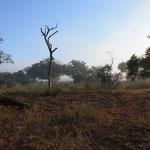 Nächstes Highlight: Der Hluhluwe-Imfolozi Safari Park