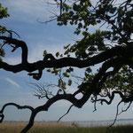 Jahrhunderte alte Eichen an schilfbestandenen Ufern prägen das Bild
