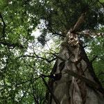 Croatia - Experience Wilderness Risnjak NP - Blitzeinschlag