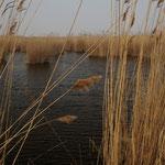 """""""Schilfexkursion"""" - Immer wieder tauchen kleine Seen auf"""