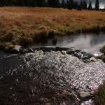 Zum Abschluß geht's in die einsame Naturlandschaft des Böhmerwaldes