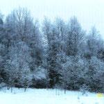 Кирилл Е., 2а кл. Деревья в серебре