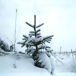 Алёна В., 2а кл. Елочка в снегу