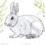 """Николай Рубцов. """"Про зайца"""". Рисовал Павел Д., 1б класс"""