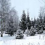 Анастасия И., 2а кл. Деревья возле дома