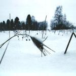 Алёна В., 2а кл. Колосок под снегом