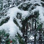 Алёна В., 2а кл. Снег на лапах ели