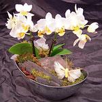 ausgarnierte Orchidee imSchiff