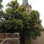 Die Münsterkirche in Herford