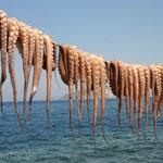 Tintenfischtrocknung