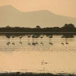 Flamingos am Salzsee in Tigaki