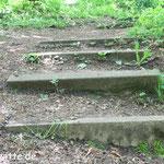 Stufen im Wald. - Wiehengebirge