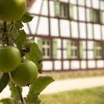 Äpfel. - Bad Windsheim