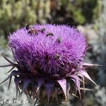 Flora und Fauna
