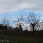 Die Zweige zum Himmel