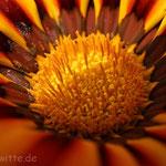 Blume.