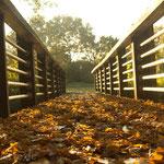 Herbstlaub. - Rheda-Wiedenbrück