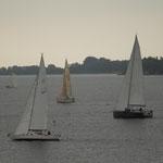 Regatta auf dem Strelasund