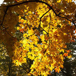 Goldener Herbst. - Gütersloh
