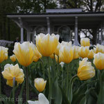 Blumen. - Bad Waldliesborn