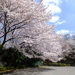 お花見のできる公園