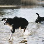 Jesus kann auf dem Wasser laufen... UND Tamino!