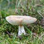 Westruper Heide - Nikon D7100, f/5, 1/160 Sek, 200 mm