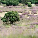 Westruper Heide - Nikon D7100, f/5, 1/320 Sek, 200 mm