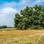 Westruper Heide - Nikon D7100, f/8, 1/250 Sek, 28 mm