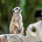 Tierpark Hamm - Nikon D7100, f/5, 1/500 Sek, 200mm, ISO 560