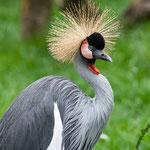 Tierpark Hamm - Nikon D7100, f/4.5, 1/500 Sek, 200mm, ISO 450