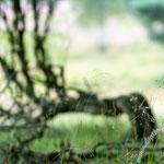 Westruper Heide - Nikon D7100, f/3.2, 1/320 Sek, 70 mm