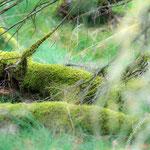 Westruper Heide - Nikon D7100, f/3.2, 1/160 Sek, 122 mm