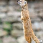 Tierpark Hamm - Nikon D7100, f/4.5, 1/500 Sek, 200mm, ISO 400