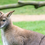 Tierpark Hamm - Nikon D7100, f/5, 1/400 Sek, 130mm, ISO 2000 1.4 fach Konverter