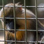 Tierpark Hamm - Nikon D7100, f/2.8, 1/400 Sek, 100mm, ISO 500, 1.4 fach Konverter