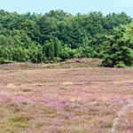 Westruper Heide - Nikon D7100, f/8, 1/250 Sek, 165 mm