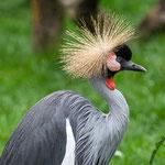 Tierpark Hamm - Nikon D7100, f/4.5, 1/500 Sek, 180mm, ISO 400