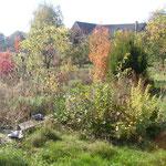 Essbare Wildpflanzen und Kräuter gehören in jeden Permakulturgarten