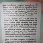 Importance de la culture des cochenilles pour l'Espagne et les Canaries