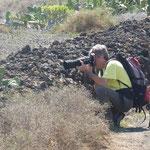 Ces murets protègent les cultures de cactus des vents forts de l'île