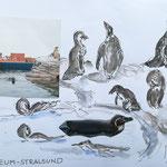 Ozeaneum Stralsund, Humboldt-Pinguine