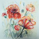 Mohnblumen, Aquarell, 30 x 30 cm