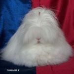 автор Томлоп Татьяна. 2м. в группе кроликов