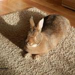 автор Малыгина Анна. 3м. в группе кроликов