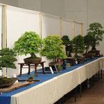 Viele edle Bonsai wurden ausgestellt