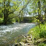 Fangbericht // Kinzig // Bachforelle // Fliegenfischen
