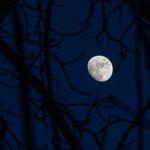 Mond im Geäst